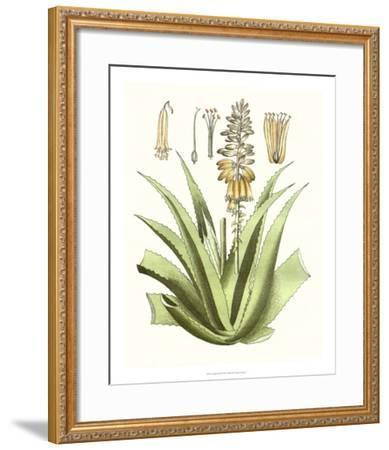 Antique Aloe II-Unknown-Framed Giclee Print