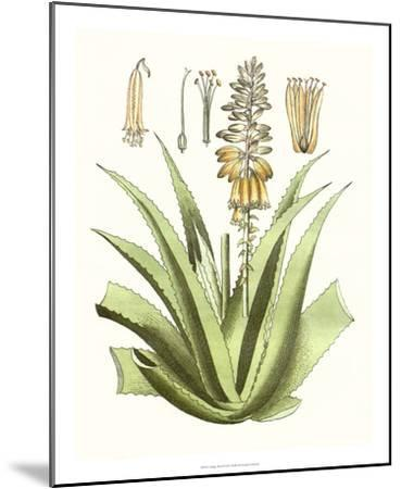 Antique Aloe II-Unknown-Mounted Giclee Print
