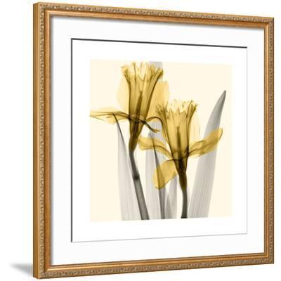 Daffodils II-Steven N^ Meyers-Framed Giclee Print