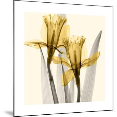 Daffodils II-Steven N^ Meyers-Mounted Giclee Print