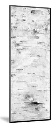 Birch Bark V (BW)-William Neill-Mounted Giclee Print