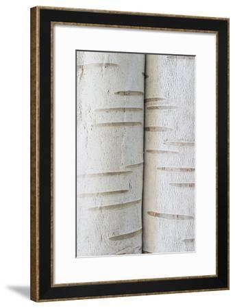 Birch Bark IV-William Neill-Framed Giclee Print