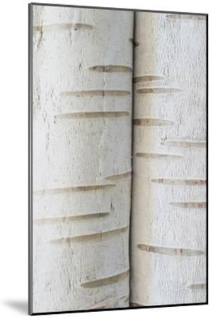 Birch Bark IV-William Neill-Mounted Giclee Print
