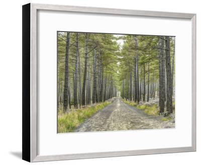 Forest Trails-Assaf Frank-Framed Giclee Print