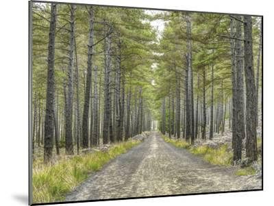Forest Trails-Assaf Frank-Mounted Giclee Print