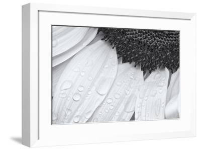 Dynamic Focus-Markus Lange-Framed Giclee Print
