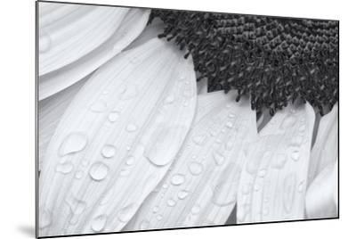 Dynamic Focus-Markus Lange-Mounted Giclee Print