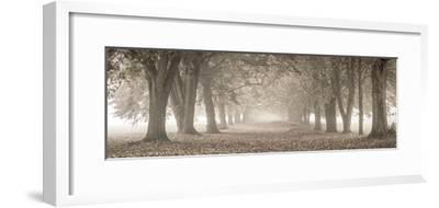 Autumn Pathway-Assaf Frank-Framed Giclee Print