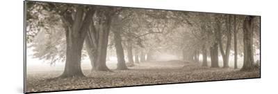 Autumn Pathway-Assaf Frank-Mounted Giclee Print