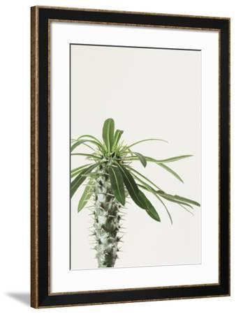 Ocota Focus-Irene Suchocki-Framed Giclee Print