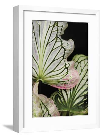 Lobatsi I-Irene Suchocki-Framed Giclee Print