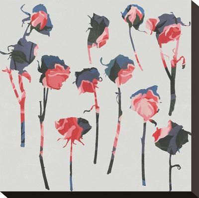 Rose 1-Garima Dhawan-Stretched Canvas Print