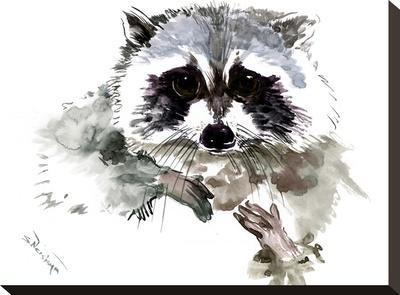 Raccoon 1-Suren Nersisyan-Stretched Canvas Print