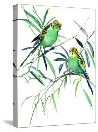 Parakeets Budgies-Suren Nersisyan-Stretched Canvas Print
