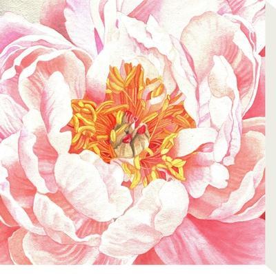 Large Peach Peony-Elizabeth Hellman-Stretched Canvas Print