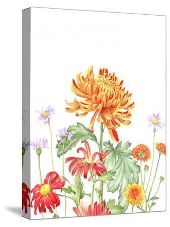 Chrysanthemum Card-Elizabeth Hellman-Stretched Canvas Print