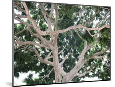Tree-Stephanie Frances-Mounted Art Print