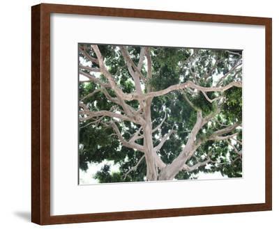 Tree-Stephanie Frances-Framed Art Print