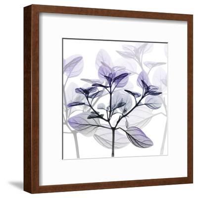 Delightful Pleasures 2-Albert Koetsier-Framed Art Print