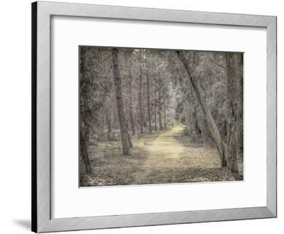 Forest of Dreams-Kimberly Allen-Framed Art Print