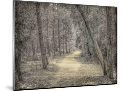 Forest of Dreams-Kimberly Allen-Mounted Art Print