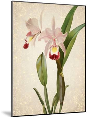 Orchids 2-Kimberly Allen-Mounted Art Print
