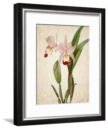 Orchids 2-Kimberly Allen-Framed Art Print
