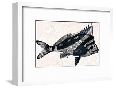 Sea Life 2-Kimberly Allen-Framed Art Print