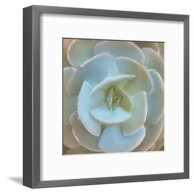 Succulent 1-Kimberly Allen-Framed Art Print