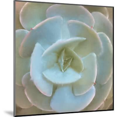 Succulent 1-Kimberly Allen-Mounted Art Print