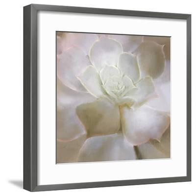 Succulent 2-Kimberly Allen-Framed Art Print