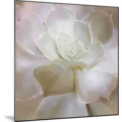 Succulent 2-Kimberly Allen-Mounted Art Print