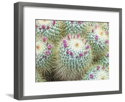 Arid Florals-Assaf Frank-Framed Giclee Print