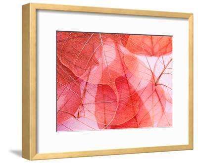 Delicate In Pink-Ingrid Beddoes-Framed Art Print