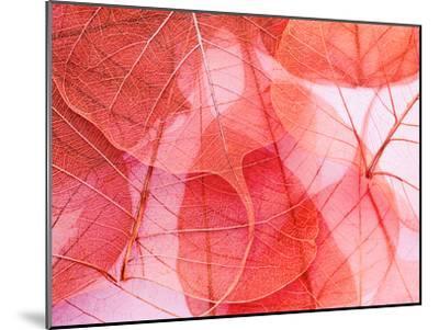 Delicate In Pink-Ingrid Beddoes-Mounted Art Print