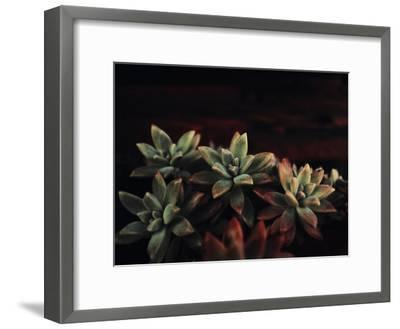 Succulent-Ingrid Beddoes-Framed Art Print