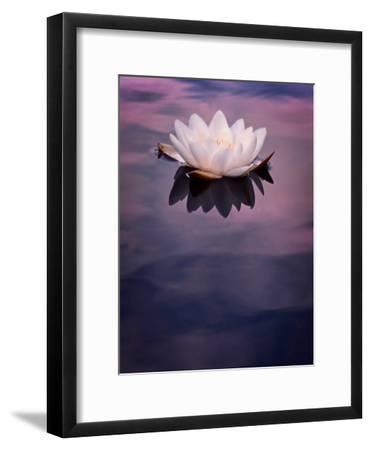 Water Lily On Dark Water-Mirja Paljakka-Framed Art Print