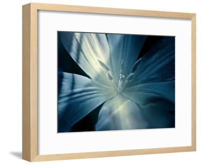 Mystique Tulip-Mirja Paljakka-Framed Art Print