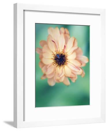 Light Yellow Flower-Mirja Paljakka-Framed Art Print