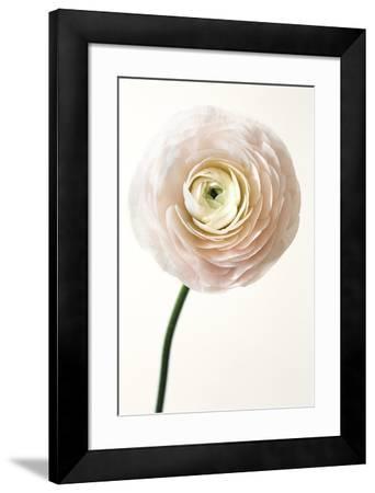 Floral Royale-Irene Suchocki-Framed Giclee Print