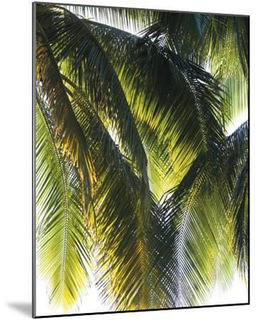 Parasol-Gaetan Caron-Mounted Giclee Print