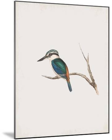 Halcyon Pyrrhopygia-John Gould-Mounted Giclee Print