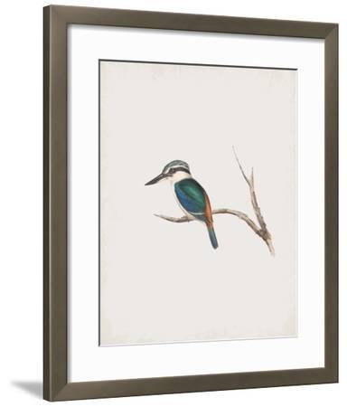 Halcyon Pyrrhopygia-John Gould-Framed Giclee Print