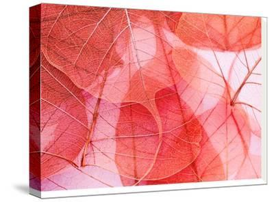 Delicate In Pink-Ingrid Beddoes-Stretched Canvas Print