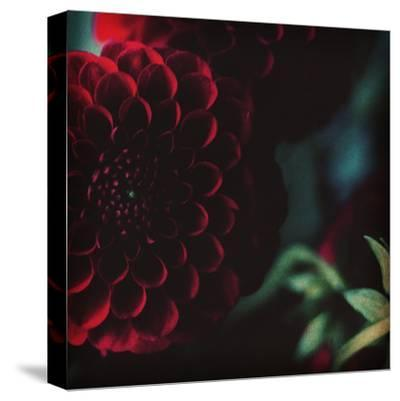 Rouge-Ingrid Beddoes-Stretched Canvas Print