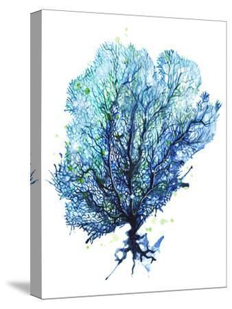 Sea Fan Aqua-Sam Nagel-Stretched Canvas Print