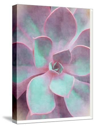 Sweet Succulent-Emanuela Carratoni-Stretched Canvas Print