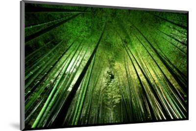 Bamboo Night--Mounted Art Print