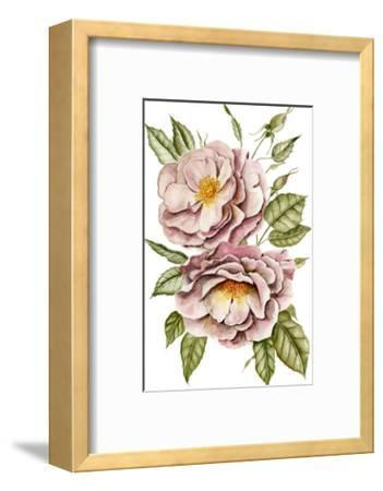 Matangi Roses-Shealeen Louise-Framed Giclee Print