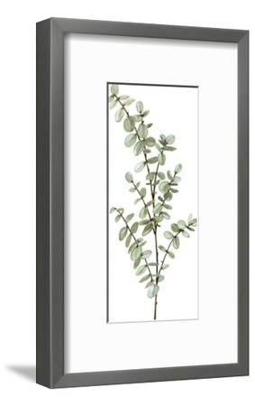 Baby Blue Eucalyptus-Shealeen Louise-Framed Giclee Print